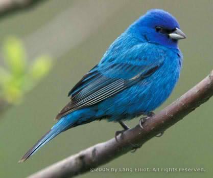 A Real Twitter Bird
