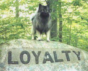Loyal Customer Service