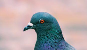 Google 'Pigeon' Update Rewards Local Marketing