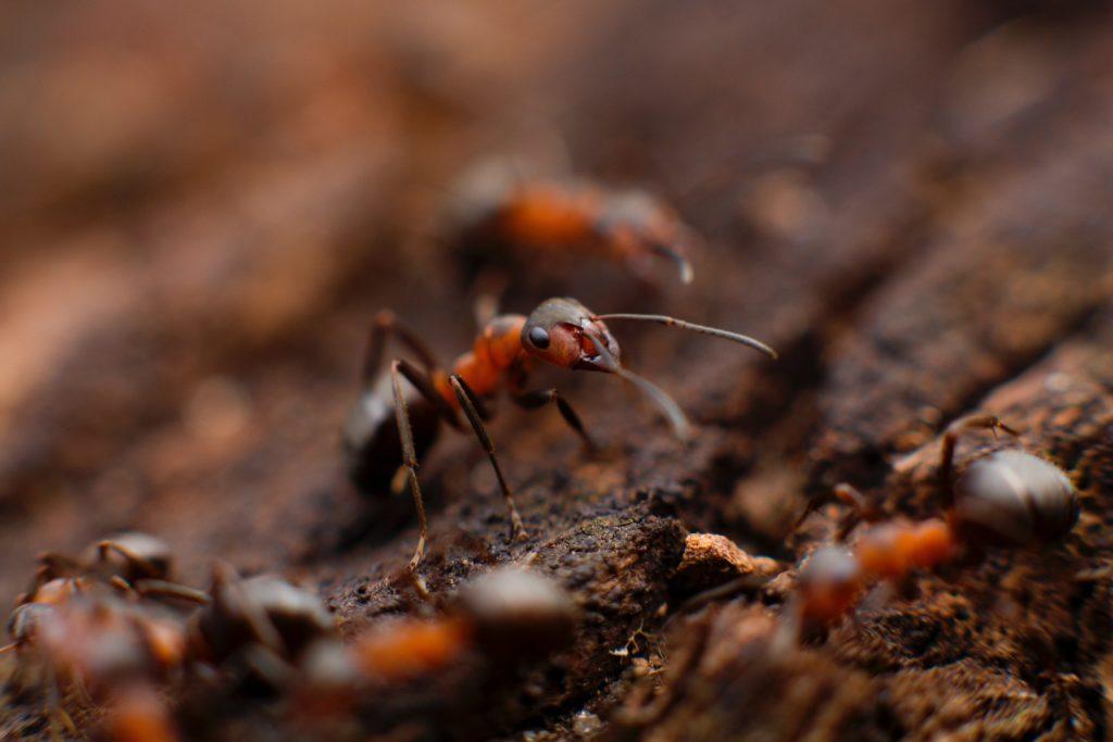JS Pest Control